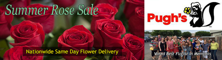 Summer Rose Sale