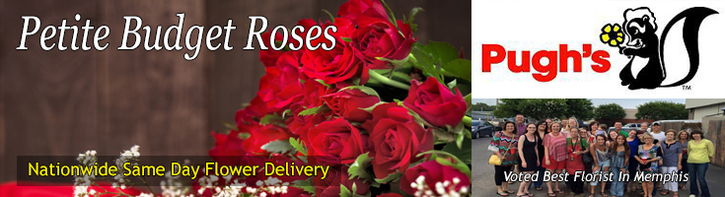 Roses For Any Budget