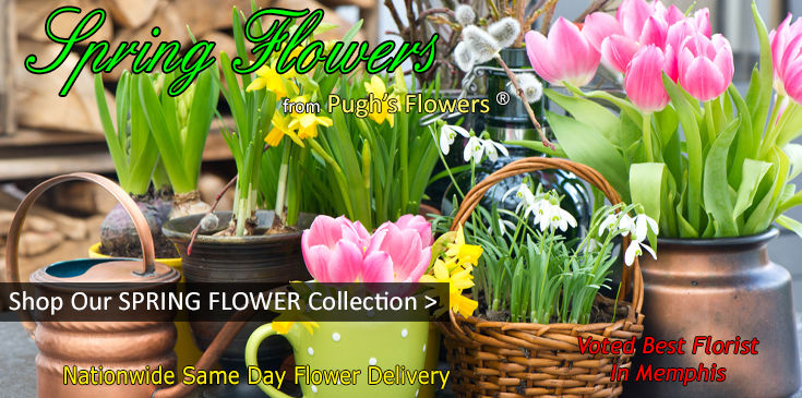 Spring Flowers, Spring Tulips, Spring Floral Collection.